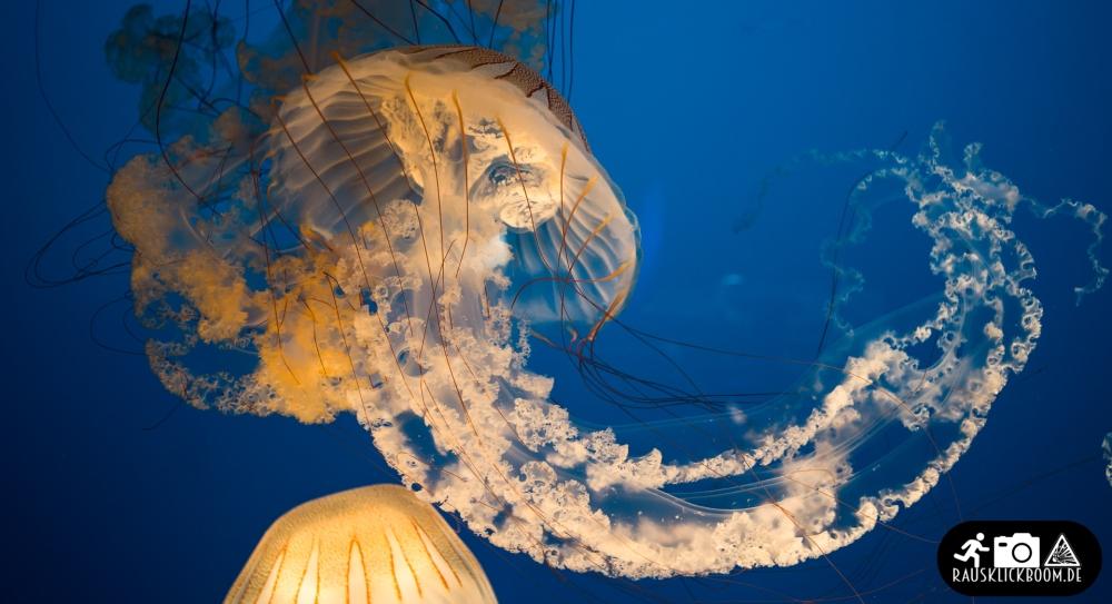VF_JellyfishExperience