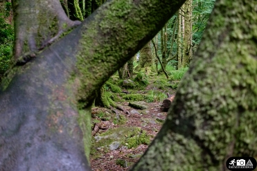 Irland-Killarney_National_Park-2