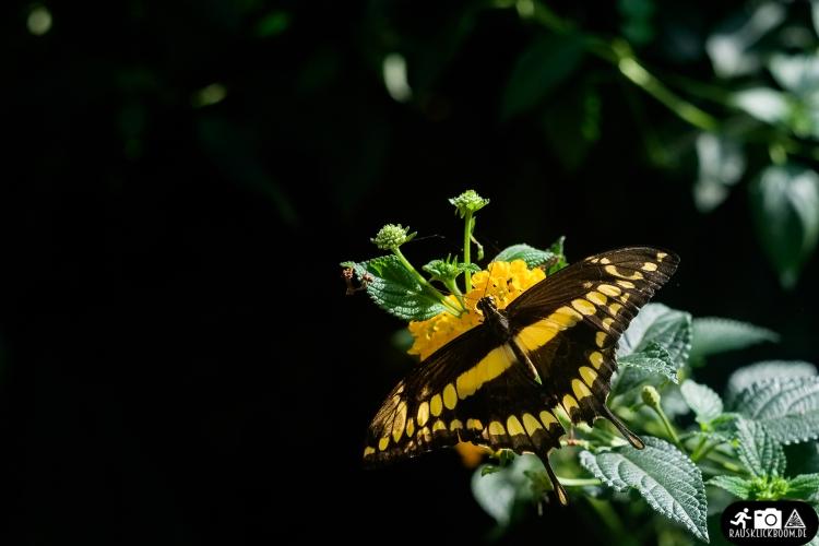 Schmetterling-Botanischer-Garten-Wuppertal-1
