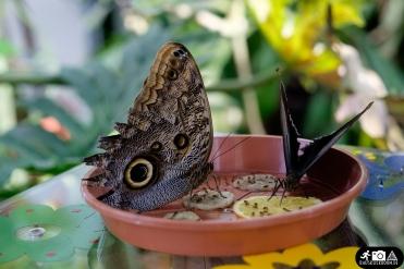 Schmetterling-Botanischer-Garten-Wuppertal-2