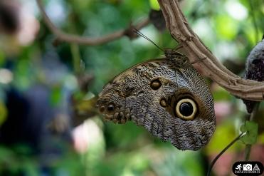 Schmetterling-Botanischer-Garten-Wuppertal-3