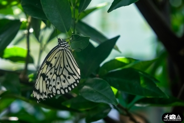 Schmetterling-Botanischer-Garten-Wuppertal-4