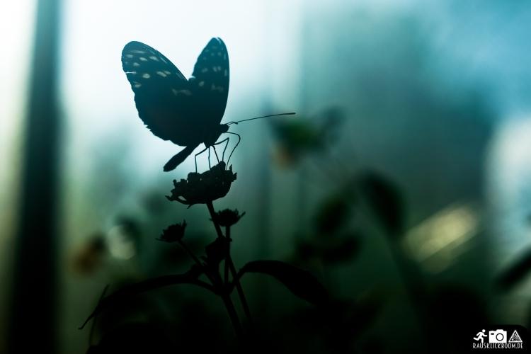 Schmetterling-Botanischer-Garten-Wuppertal-5