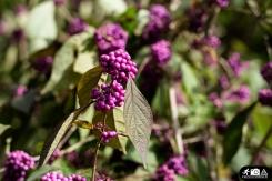 Schmetterling-Botanischer-Garten-Wuppertal-6