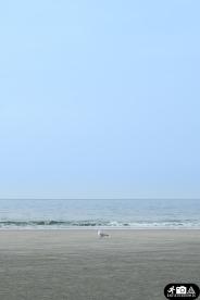 Möwe am Strand von Norderney